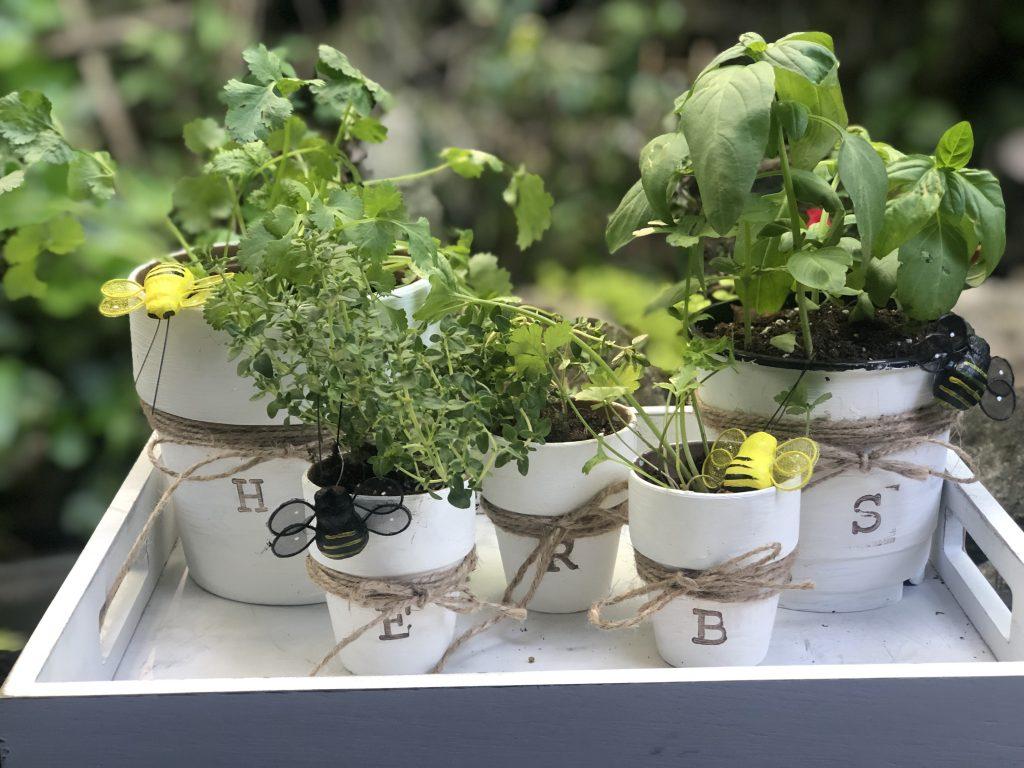 Turn your terra cotta pots into super fun indoor garden