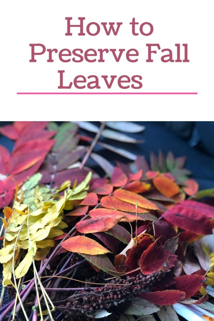 Budget friendly fall crafting. Learn how to preserve your fall leaves for crafting in one easy process. Fall crafting with leaves. Fall crafting