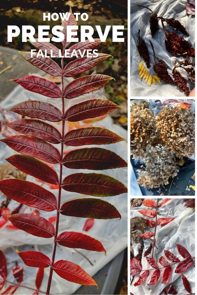 Preserve Mother Nature fruits .Learn how to preserve your fall leaves for crafting in one easy process. Fall crafting with leaves. Fall crafting